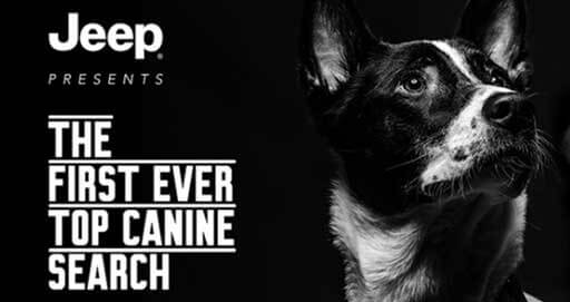 FCA Launches First #JeepTopCanine Search